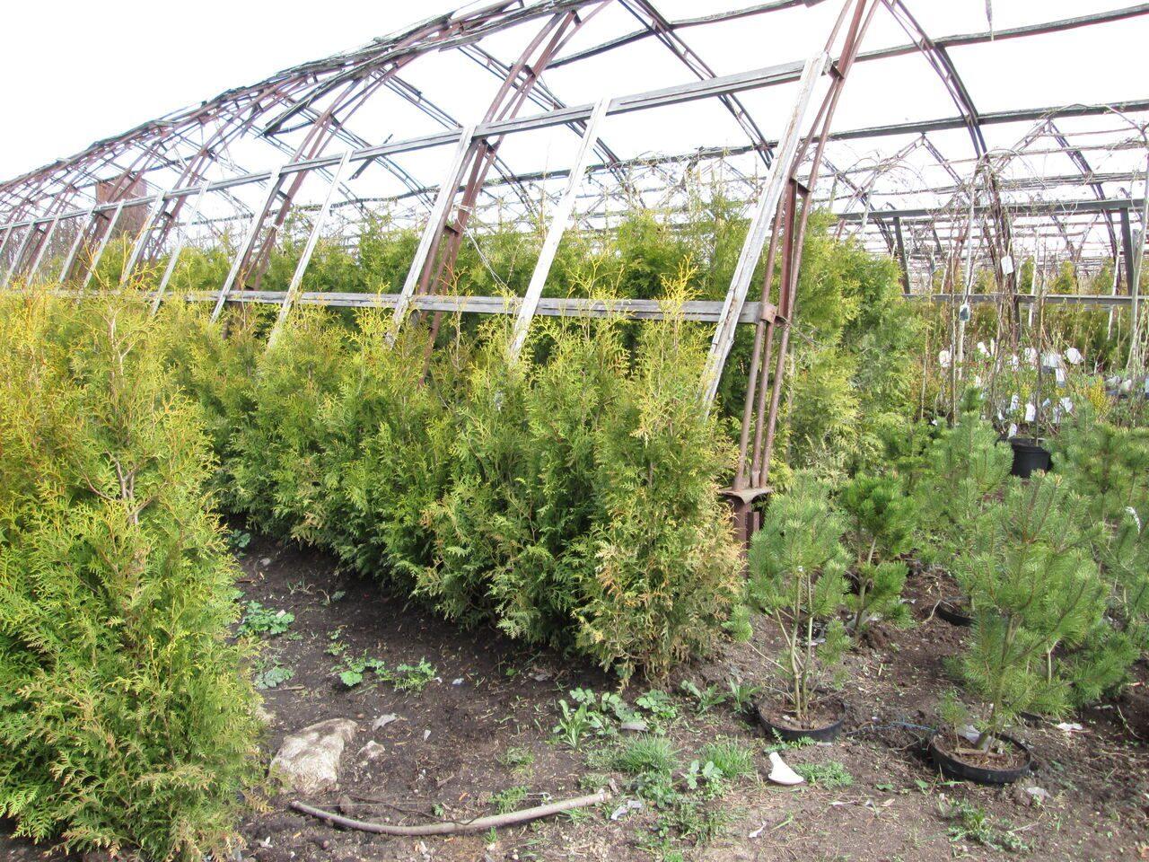 Купить рассаду в Санкт-Петербурге для сада и огорода 82